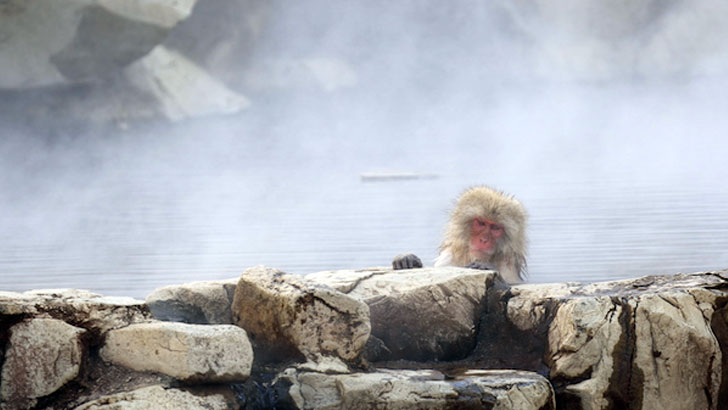 1泊でも長期滞在でもOK。温泉の力を体感できる湯治場へ