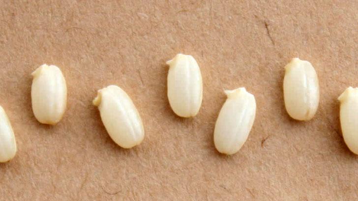玄米より栄養豊富でヘルシー!しかも美味しい発芽玄米
