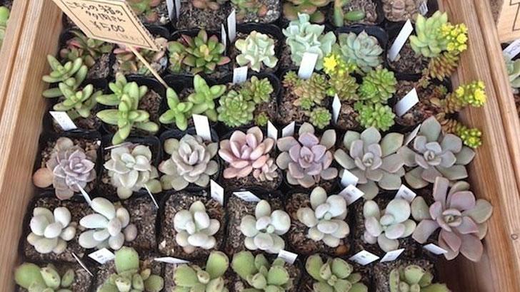 多肉植物のかわいい寄せ植え