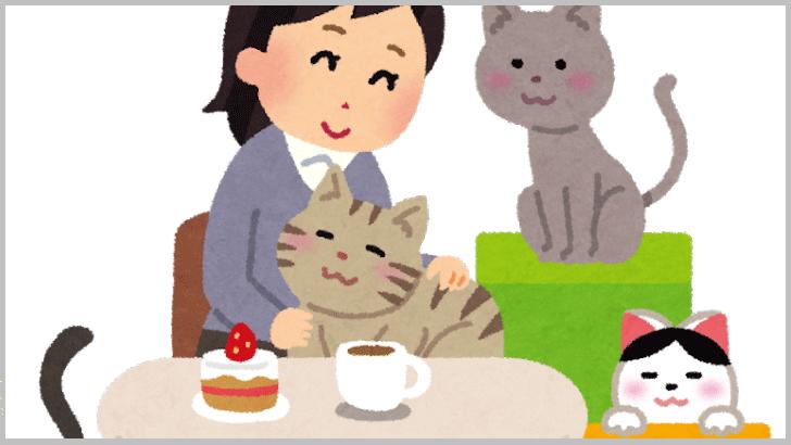 のんびりまったり、猫カフェで癒しのひととき