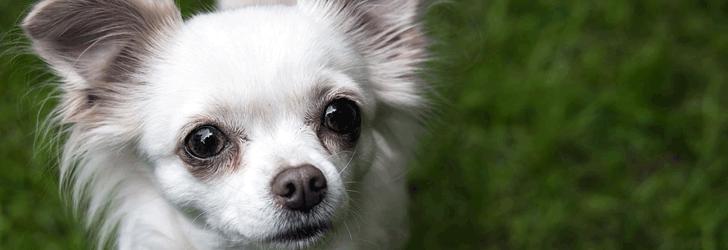 小型犬の飼い方・しつけ方