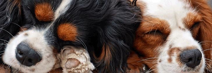 中型犬の飼い方・しつけ方